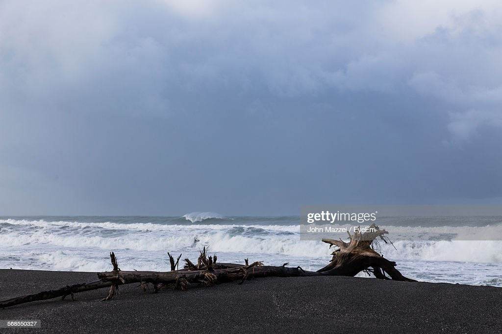 Driftwood At Beach : Stock Photo
