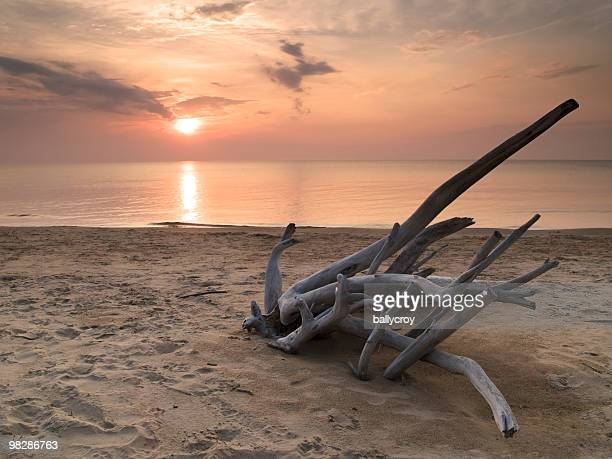 Driftwood au coucher du soleil