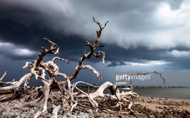 Driftwood beach, Jekyll Island, Georgia.