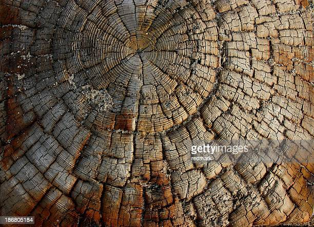 driftwood grunge pattern by the sabdy beach - vascular bundle stock photos and pictures