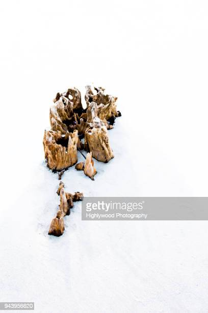 driftwood in the sand - highlywood stock photos and pictures