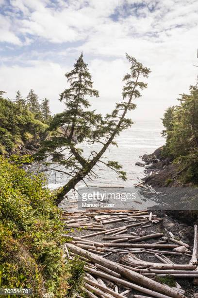 driftwood logs scattered on beach, wild pacific trail, vancouver island, british columbia, canada - vancouver island stockfoto's en -beelden