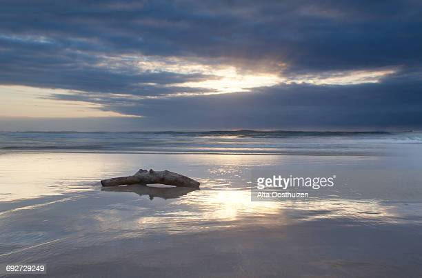 Driftwood lying on a beach at sunrise with a reflection on the wet sand, Cape Vidal South Africa