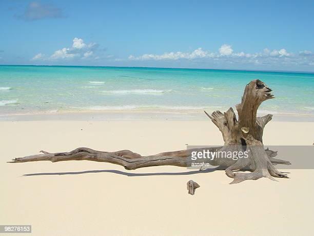 Treibholz auf lonley weißen Sandstrand der Träume