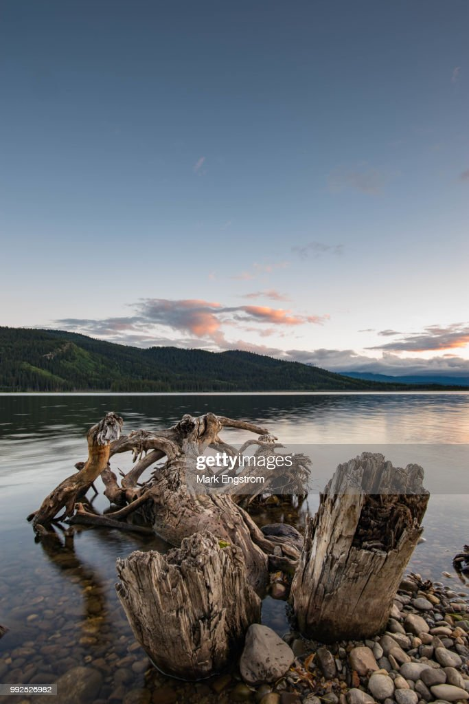 Driftwood On Alberta Beach In Canada Stock Photo