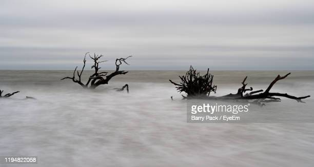 driftwood on beach against sky - barry wood stock pictures, royalty-free photos & images