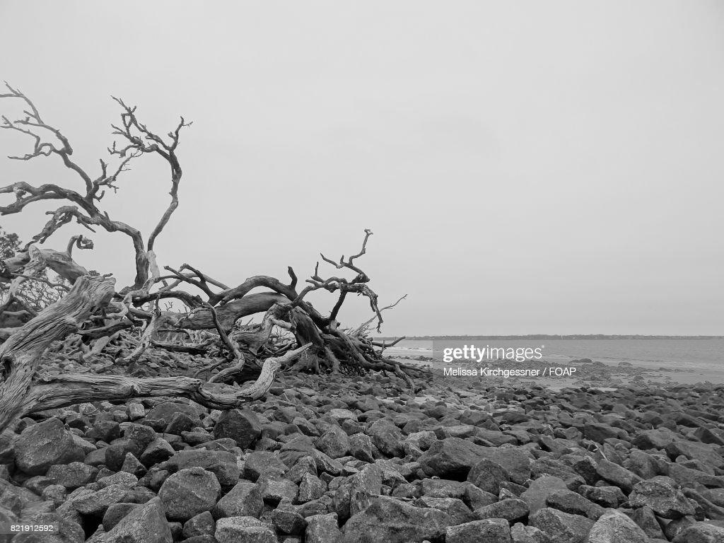 Driftwood on Beach : Stock Photo