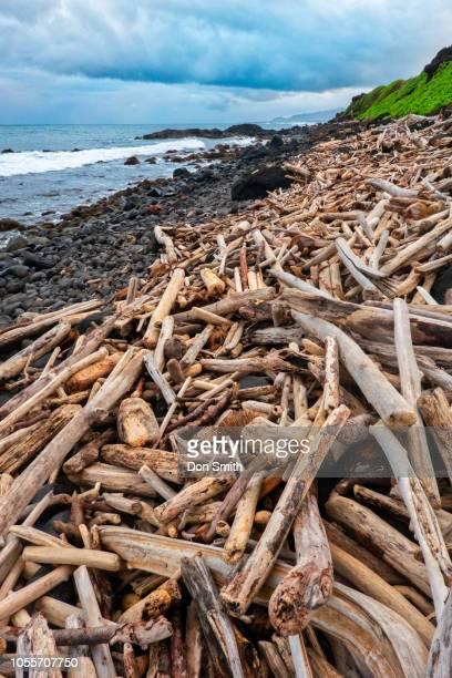 driftwood on kauai beach - don smith stockfoto's en -beelden