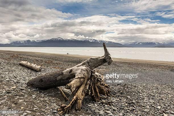 driftwood on shingle beach, homer spit, kachemak bay, alaska, usa - kachemak bay stock pictures, royalty-free photos & images