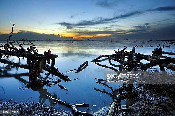Driftwood on the beach during sunset