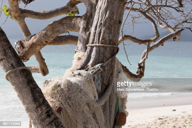 Driftwood On Tree Trunk By Sea