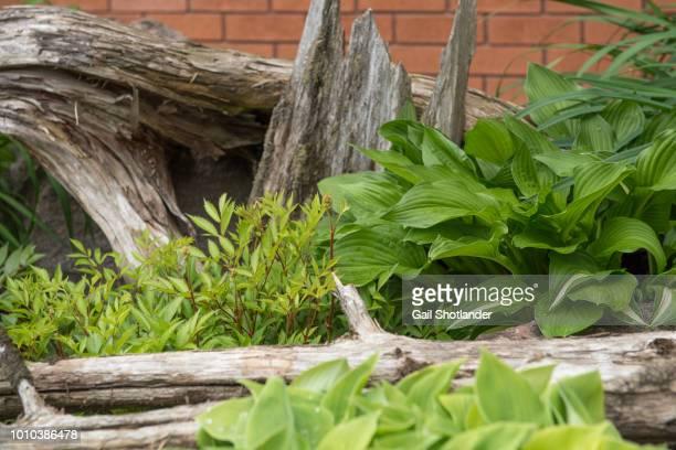 Driftwood Plant Garden