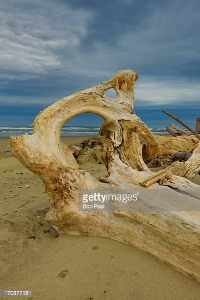 Driftwood, Southern Oregon coast near Bandon