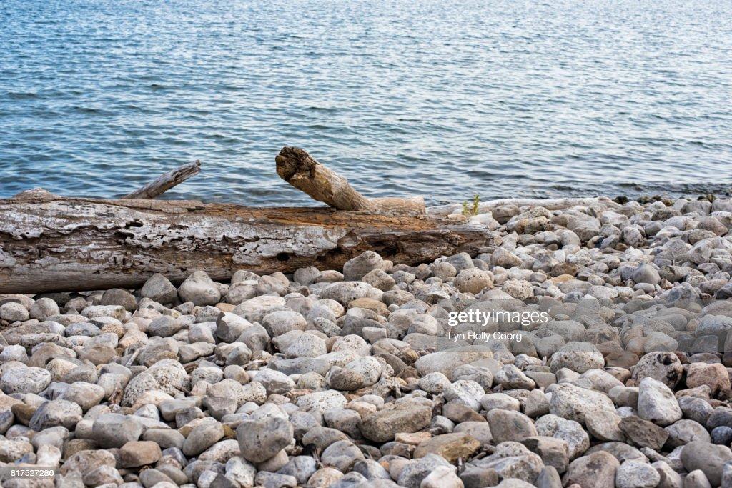 Driftwood washed up on pebble beach : Stock Photo