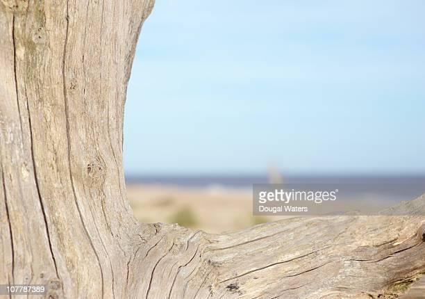 Driftwood with beach scene.