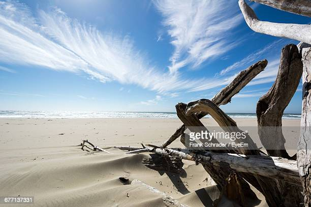 driftwoods on beach against sky - frank schrader stock pictures, royalty-free photos & images
