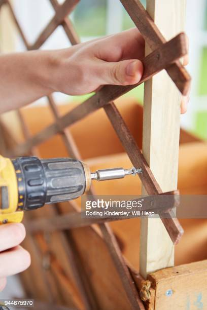 drilling screw to fix trellis(alternative support) to frame.
