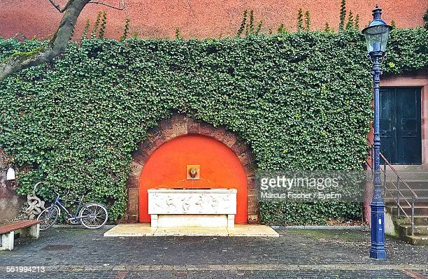 Drinking Fountain On Wall Covered With Creeper Plants