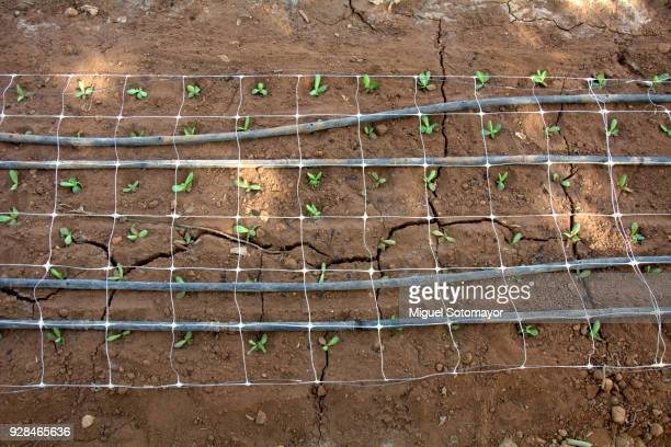 60 Top Drip Irrigation Pictures, Photos, & Images - Getty Images