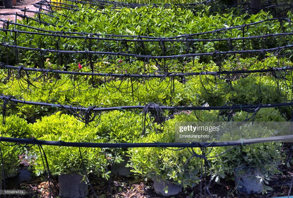 Drip irrigation sytem in a green house on a sunny day. : Stock Photo