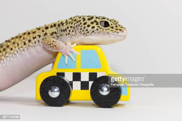 driver animal - green car crash stock pictures, royalty-free photos & images