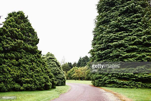 Driveway and fir trees