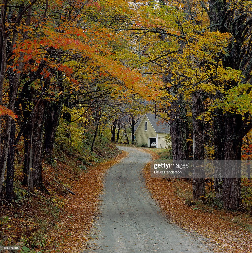 driveway through avenue of autumn trees ストックフォト getty images