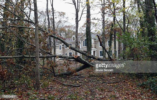 A driveway to a house on White Oak Tree Road is blocked by downed trees in the aftermath of Hurricane Sandy on October 30 2012 in Laurel Hollow New...