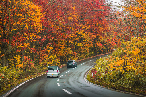 Driving car along the road during autumn season - gettyimageskorea