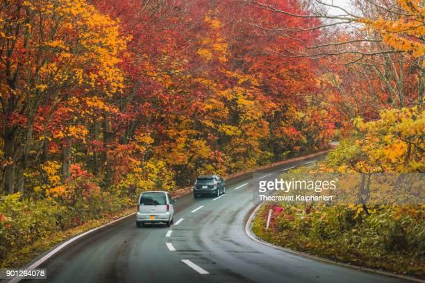 Driving car along the road during autumn season