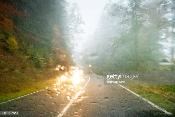Driving in a forest in the rain