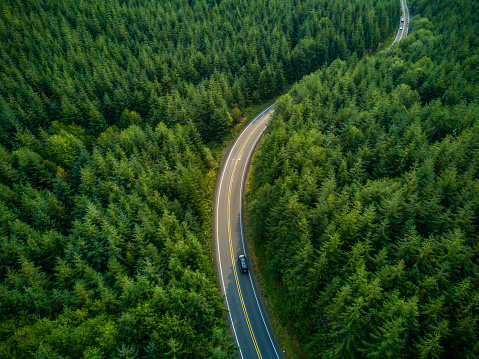 Driving Through Forest - Aerial View 888361900