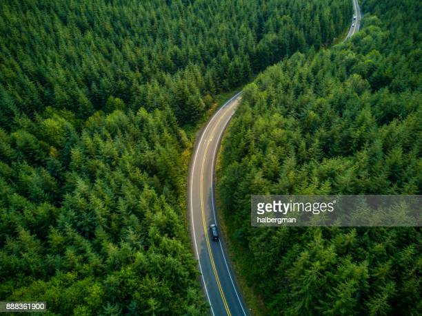 driving through forest - aerial view - strada foto e immagini stock