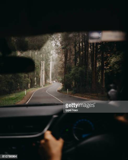 driving through forest of dandenong ranges, melbourne, australia - dandenong stock photos and pictures