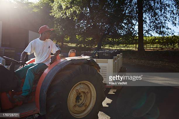 driving tractor with boxes of grapes