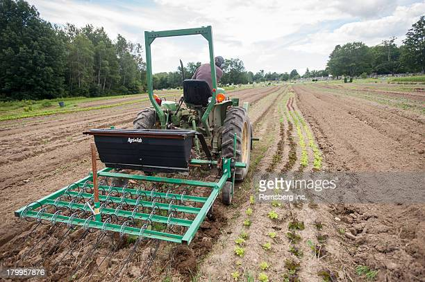 CONTENT] Driving tractor with cultivators over lettuce at organic farm Freeport ME