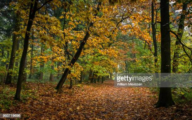 drizzly forest path - william mevissen stock pictures, royalty-free photos & images