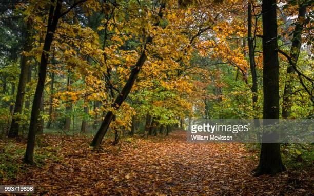 drizzly forest path - william mevissen imagens e fotografias de stock