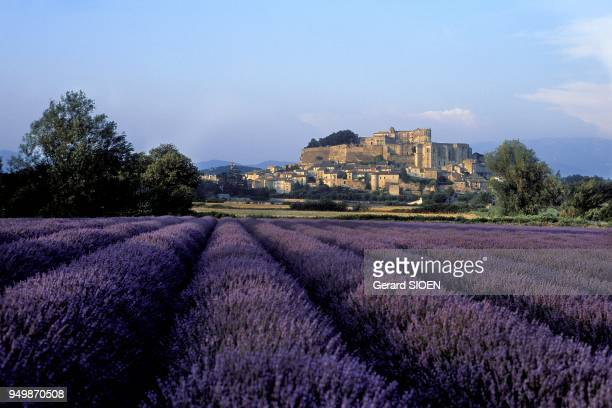 Drome provencale Grignan village and its castle Lavender field in the foreground Lavandula hybrida or lavender a natural hybrid between L...