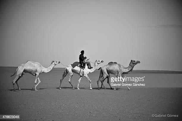 CONTENT] Dromedaryseller riding the 'Ferrari of desert' as he said the white dromedary
