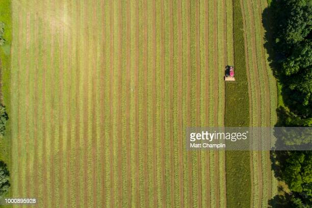 drone aerial of tractor cutting hay - wheat harvest stock pictures, royalty-free photos & images