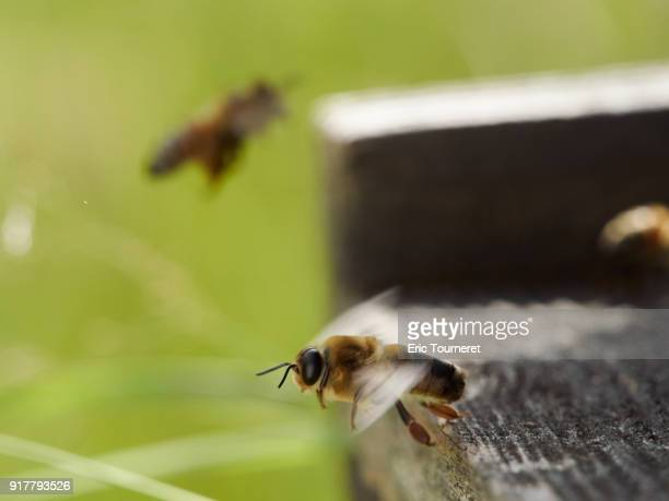 A drone bee ready for take off