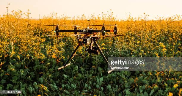 フィールド内の植物の上に低空飛行ドローン - オクトコプター ストックフォトと画像