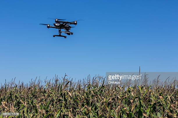 Drone Flying Over a Corn Field