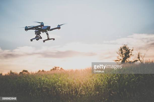 Drone Flying Over an Onions Field At Sunset