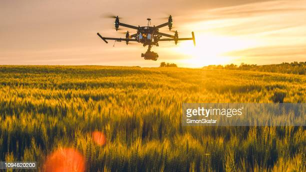 drone survolant le champ au coucher du soleil - drone photos et images de collection