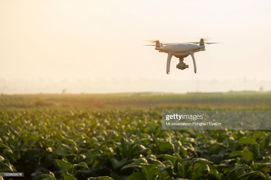 Drone Flying Over Plants On Field : Stock Photo