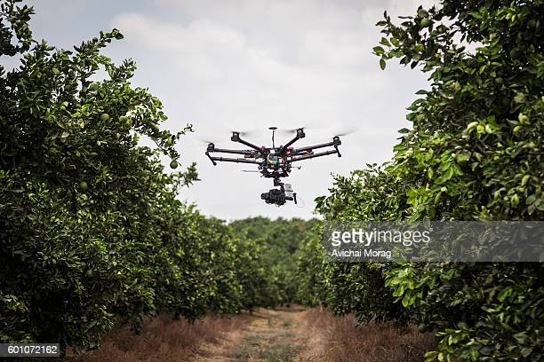 Drone flying  with citrus trees in background
