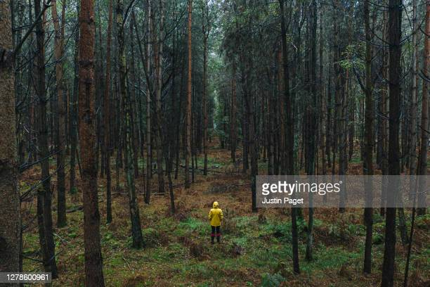 drone footage of woman in yellow raincoat in wet forest - solitude stock pictures, royalty-free photos & images
