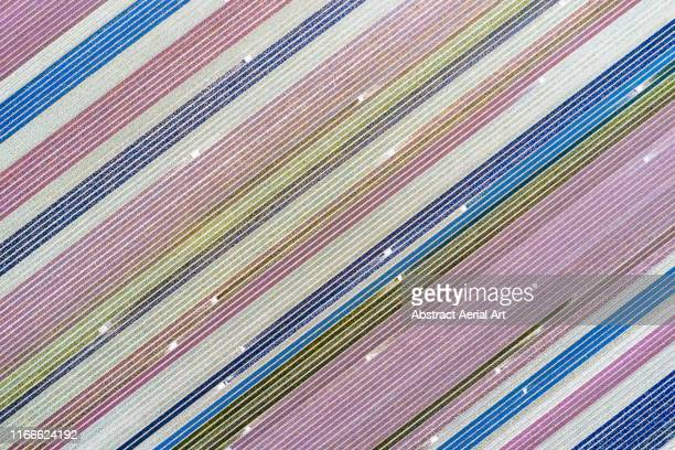 drone image directly above lavender and tulip fields, netherlands - netherlands stock pictures, royalty-free photos & images